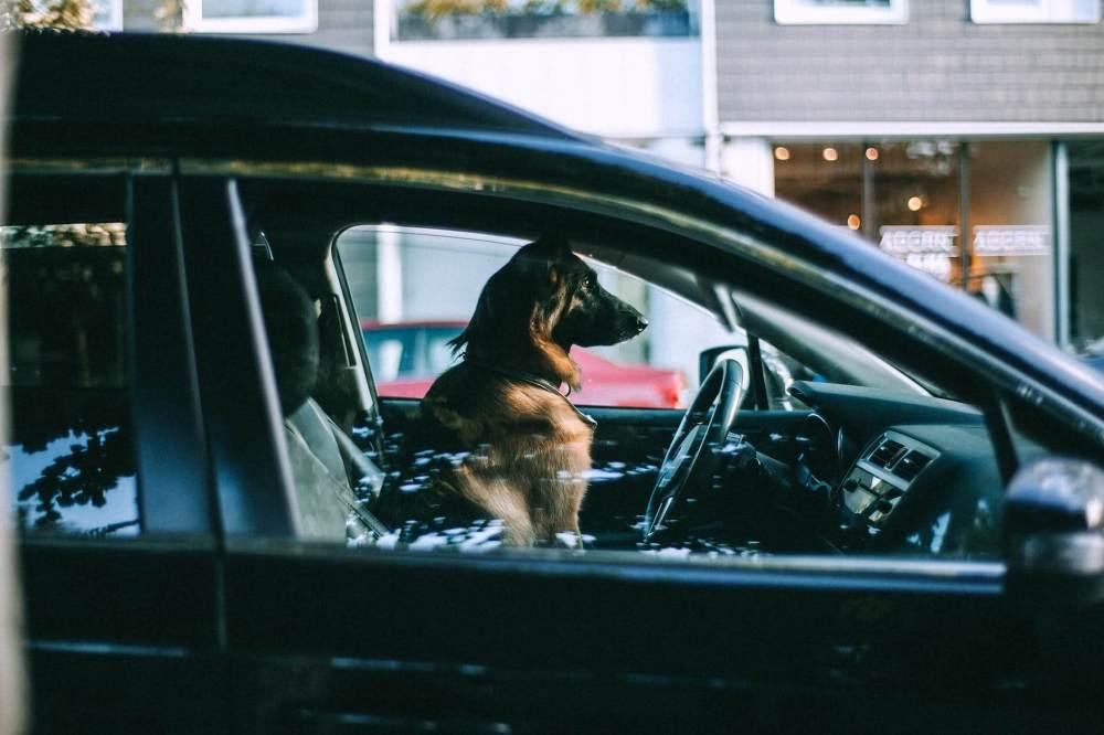dog sitting in car on city street