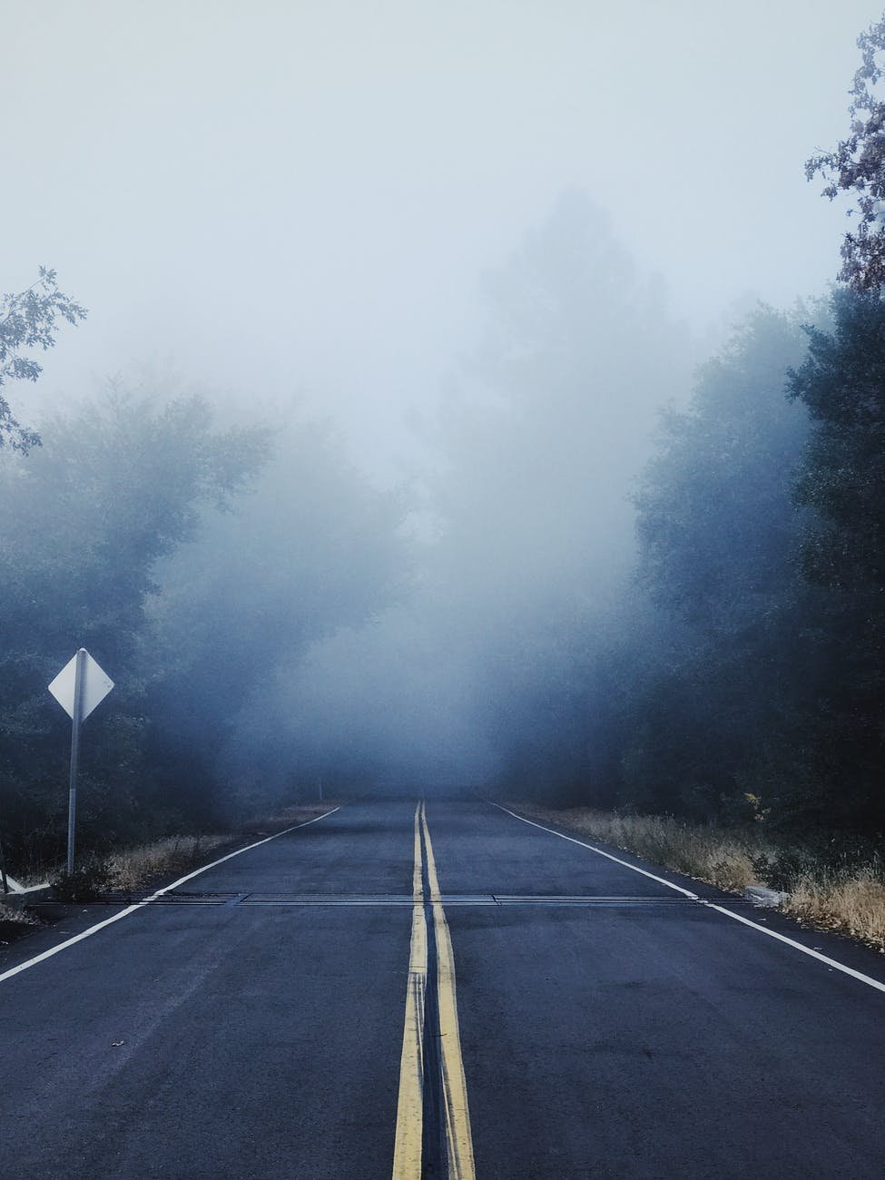 gray concrete road between trees covered with fog