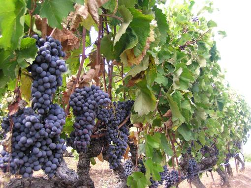 Wineries_Veroia_510