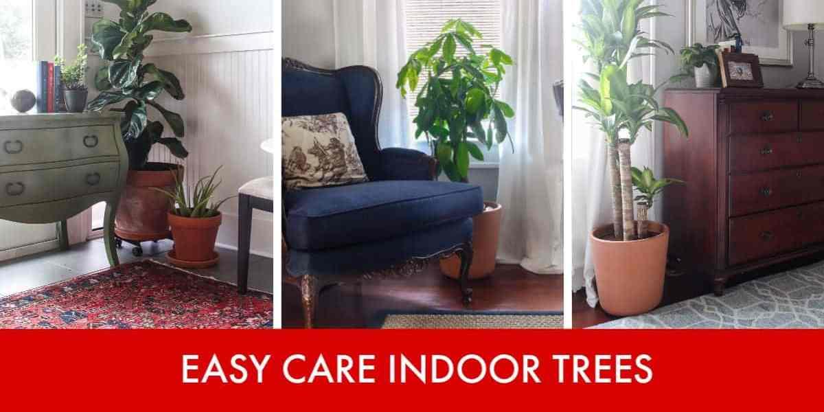 3 Low Cost, Low Maintenance Indoor Trees