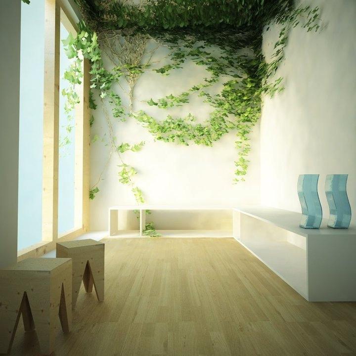 Indoor Wall Climbing Plant