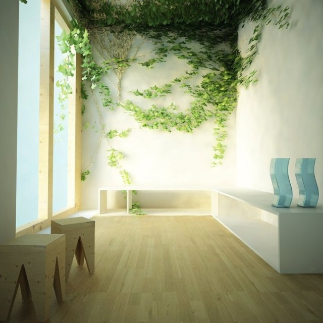 Wall Climbing Plant Indoor
