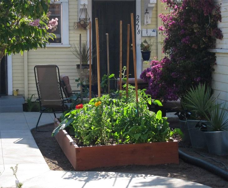 Design Vegetable Garden