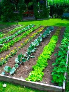 Raised Vegetable Garden Design Ideas YCLl