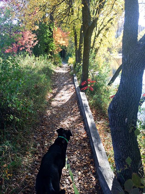 Penny-Fall-Walking