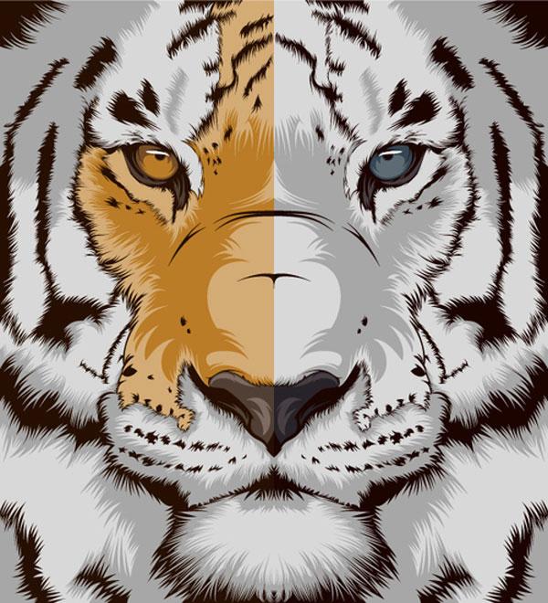 Tiger Spanish Design Inspiration