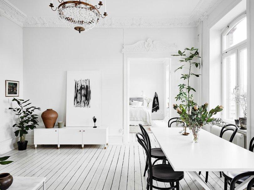 Green indoor plants decoration