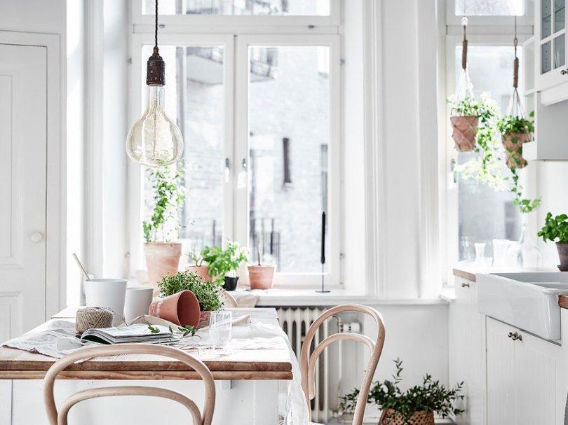 Indoor plants and herbs covering Scandinavian kitchen
