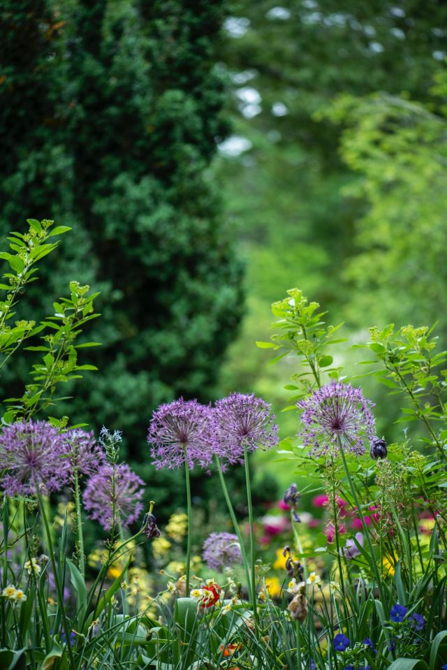 How to spruce your garden this summer