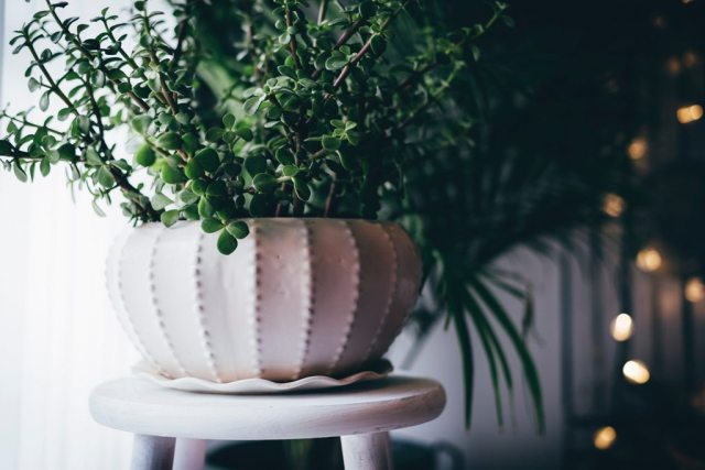 Make Your Rental Apartment Feel Homely - Decor Tips That Work