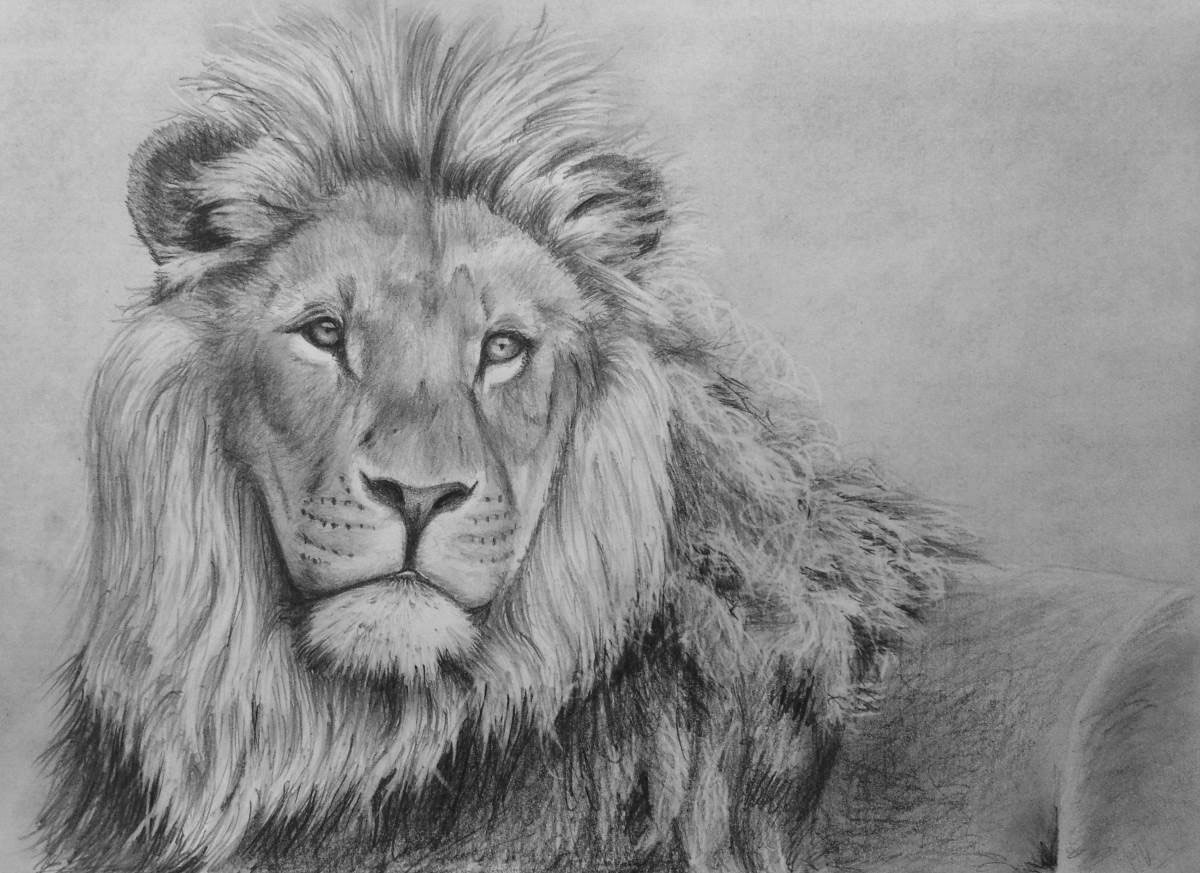 How To Draw A Lion Face And Body Tutorials For Beginners