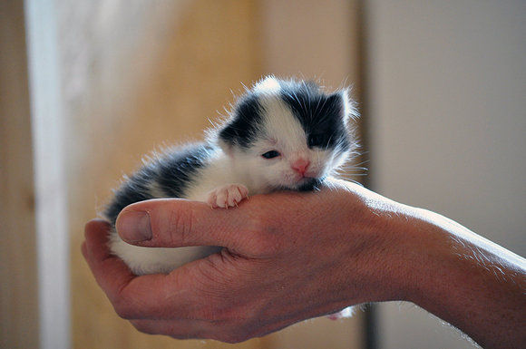 Super Cute Cats Pictures