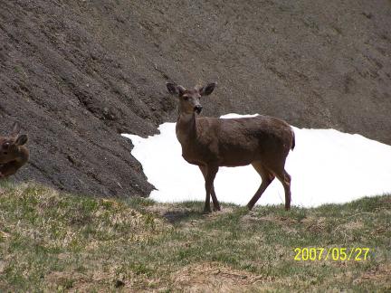 [ Deer's companion ]