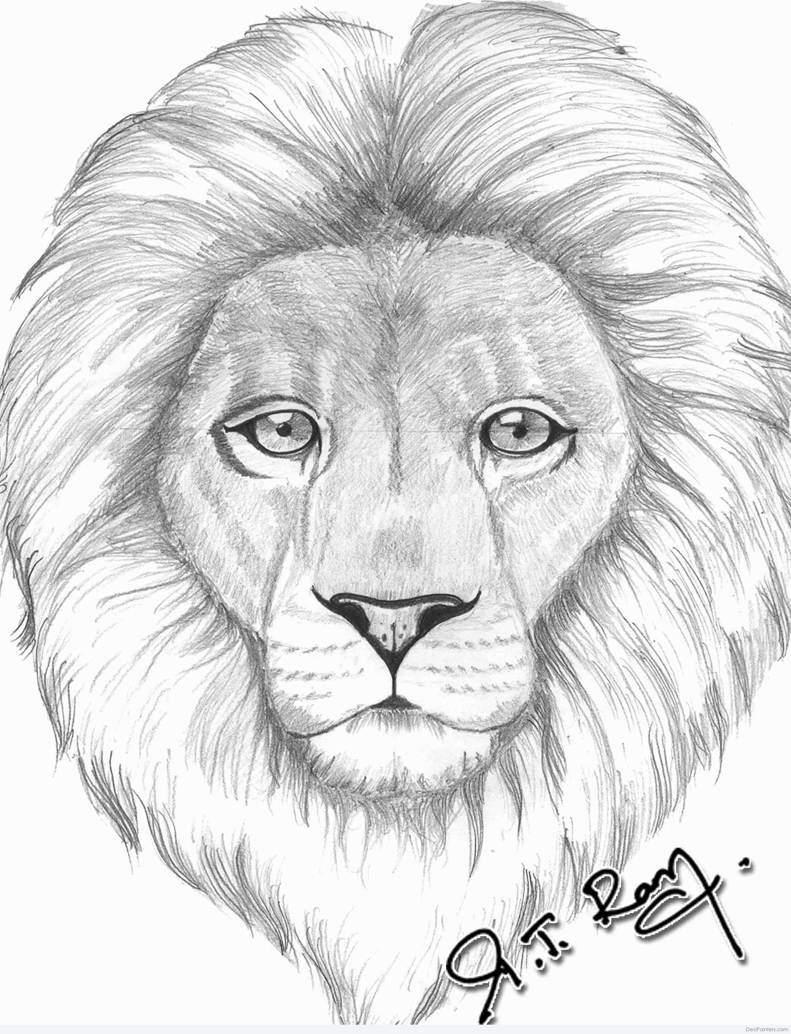Pencil Sketch Of Lion Desipainters Com