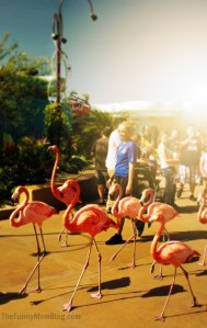 Walk This Way, SeaWorld Flamingo Parade- Wordless Wednesday