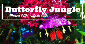 Experience the heart-fluttering wonder of the Butterfly Jungle at the San Diego Zoo Safari Park this spring