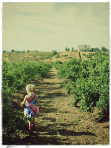 It's Blueberry Picking Time Again! – Wordless Wednesday
