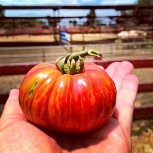 Amy's Farm Heirloom – Wordless Wednesday