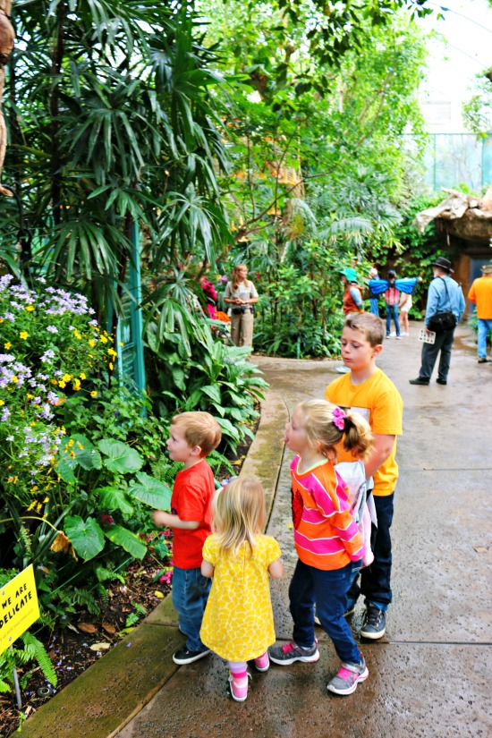 kids-at-butterfly-jungle
