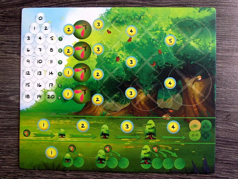 fotosynteza-15