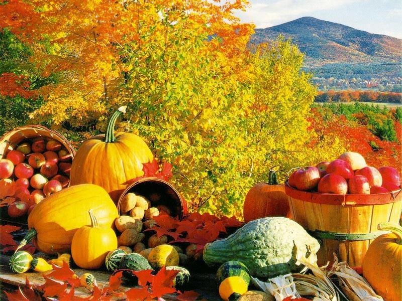 Fall Harvest wallpaper