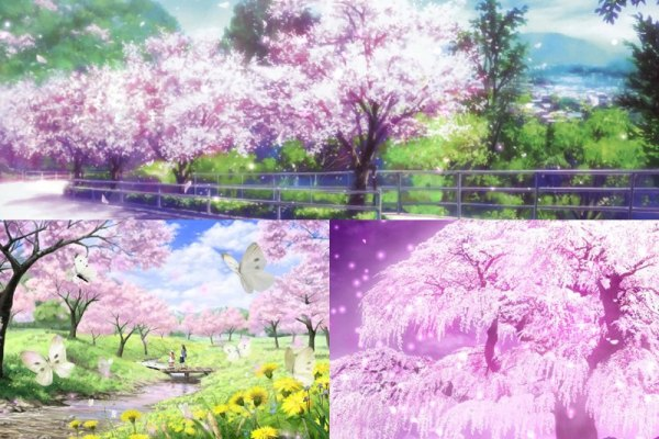 Cherry Blossoms Animated Wallpaper Preview