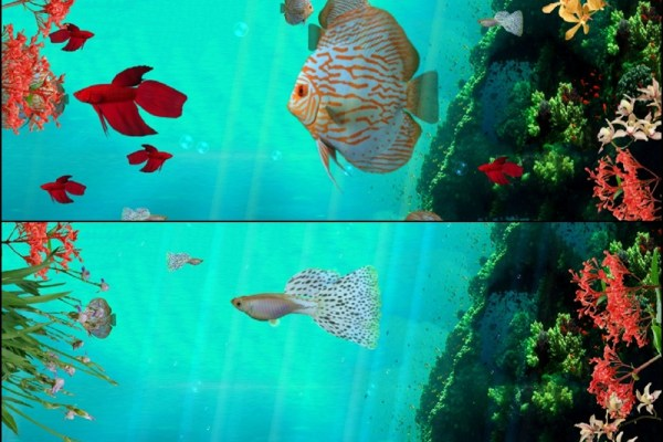 Coral Reef Aquarium 3D Animated Wallpaper Preview