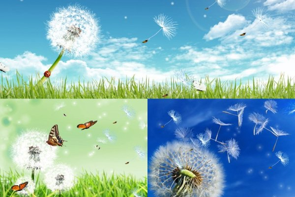 live animated wallpapers for windows xp free download