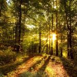 Beautiful Forest Animated Wallpaper