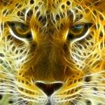 Wild Felines Animated Wallpaper