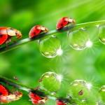 The Ladybug Animated Wallpaper