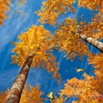 Colors Of Nature Animated Wallpaper