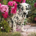 Lovely Dogs Animated Wallpaper