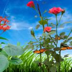 Morning Flower Animated Wallpaper