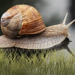 Mr Snail Animated Wallpaper