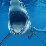 Shark Attack Animated Wallpaper