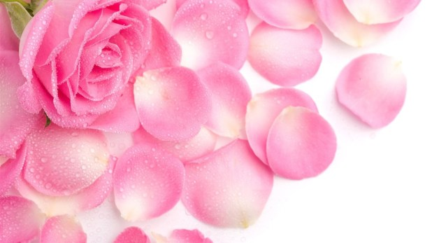 Pink colour flowers hd images shareimages simani pink flowers wallpapers cute girly color backgrounds mightylinksfo