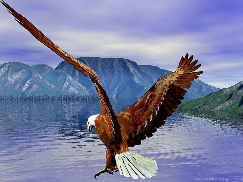 Eagle Hd Wallpapers Bald Eagle Hd Wallpapers Bald Eagle Wallpapers Desktop Background