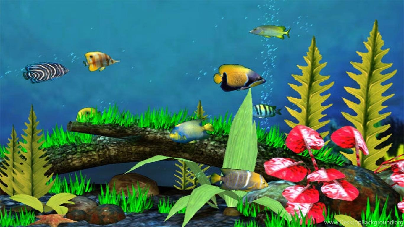 3d fish wallpapers 26732 hd wallpapers in animals imagescicom. fish