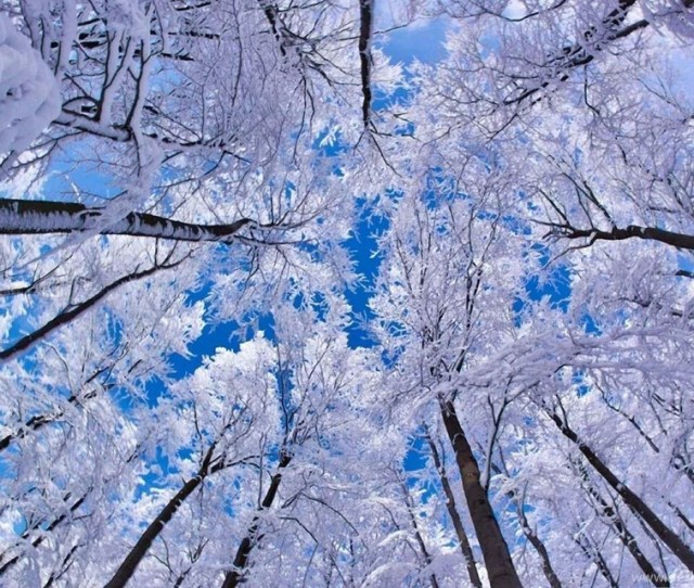 Winter Wallpapers For Android Hd Wallpaper Backgrounds Of Your Desktop Background