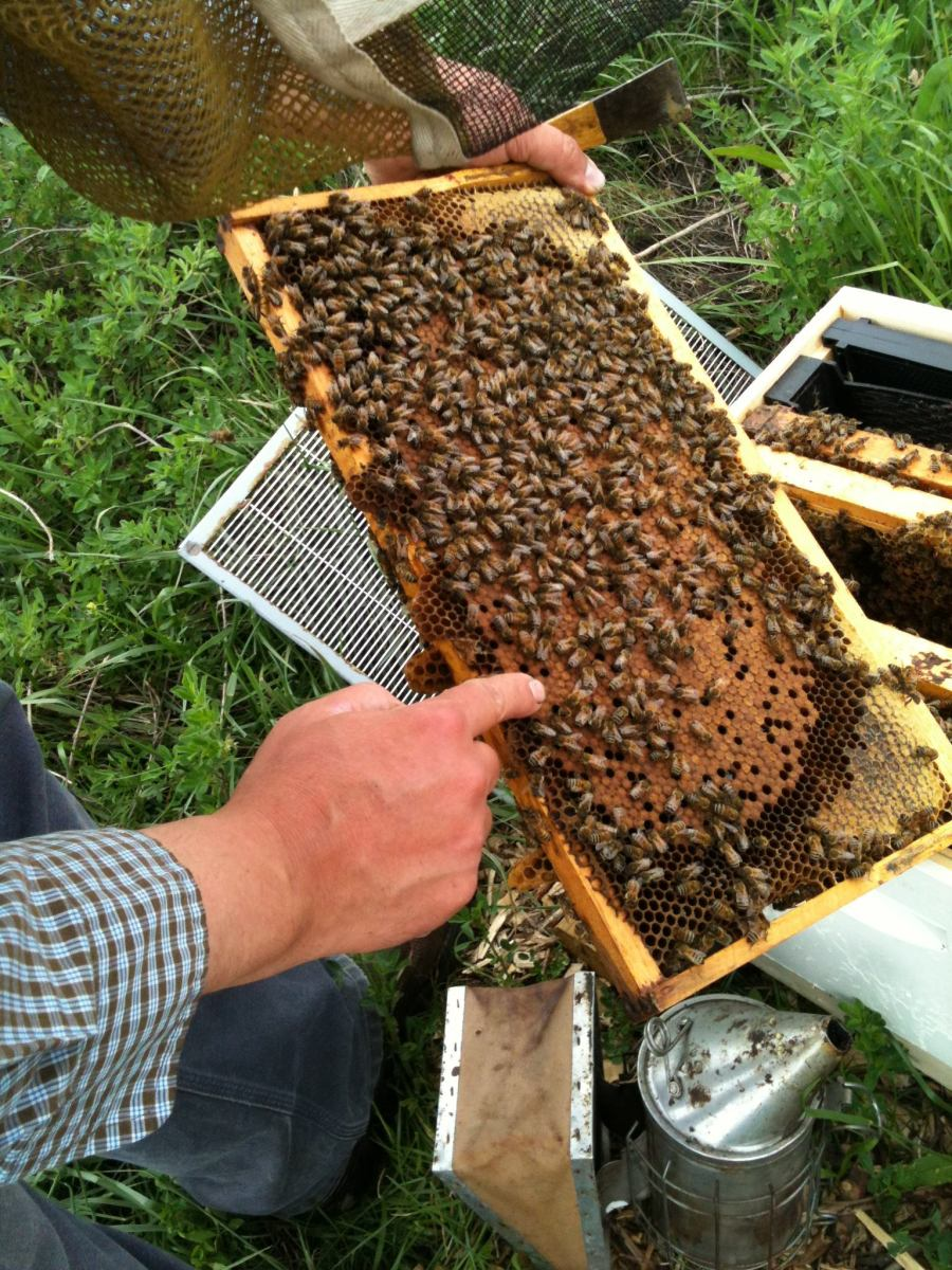 upcoming events des moines backyard beekeepers