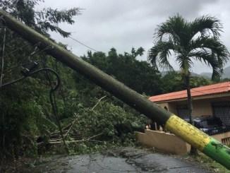 Un árbol cae en la carretera 778 de Comerío