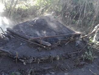 Los haitianos cruzan la frontera, se internan en las montañas dominicanas y talan árboles para la quema de carbón, que luego es llevado a Haití, donde se usa en gran escala entre familias pobres y de clase media baja.