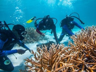 Protecto restauración de corales FGPC