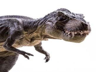 """La especie de """"Thanatos Theristes"""" es un pariente cercano de otras especies de tiranosaurios."""