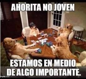 meme-gracioso-de-perros1
