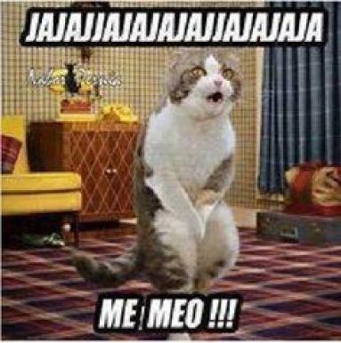 memes-whatsapp-de-animales-13
