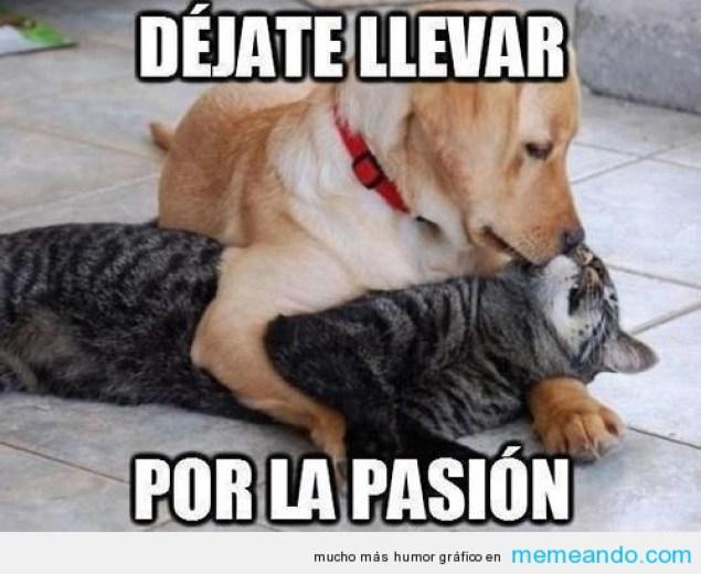 memes-whatsapp-de-animales-27