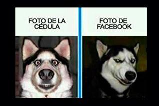 memes-whatsapp-de-animales-28