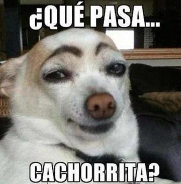memes-whatsapp-de-animales-4